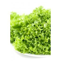 Салат листовой (в горшочке)